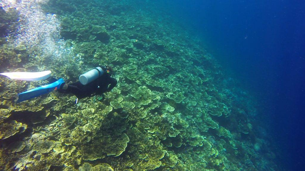 coral-pescador-island